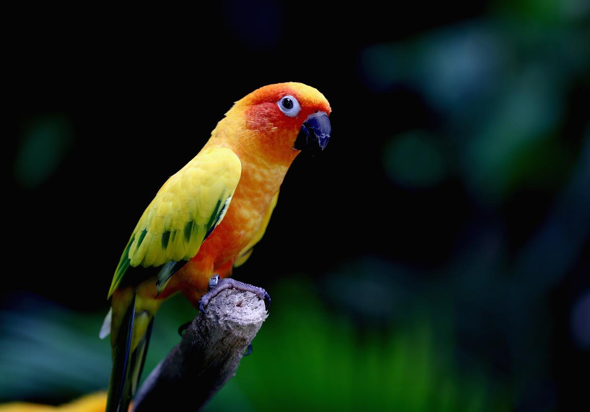 A Sun Conure sits on a brance at The Dubai Green Planet on July 27, 2017 in Dubai, United Arab Emirates.