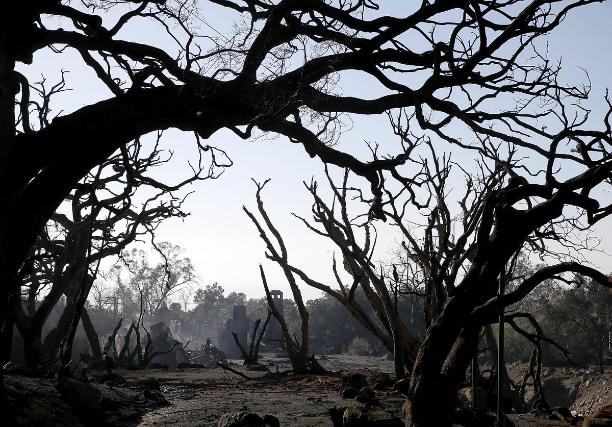 Trees that were burned by a wildfire stand in an area that full of debris and mud following a mudslide on January 11, 2018 in Montecito, California.