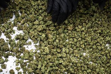 Colorado's Marijuana Industry Sold Over $1 Billion In Pot Last Year