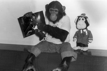 Michael Jackson's Former Pet Chimpanzee Is Now A Painter