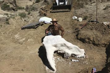 65 Million Year Old Triceratops Skull Discovered By 23-Year-Old Student